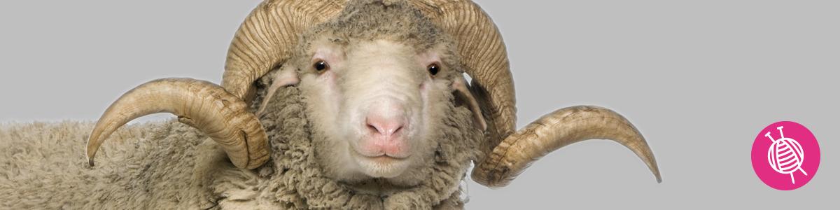 Merinowol - Alles over deze fijne wol!