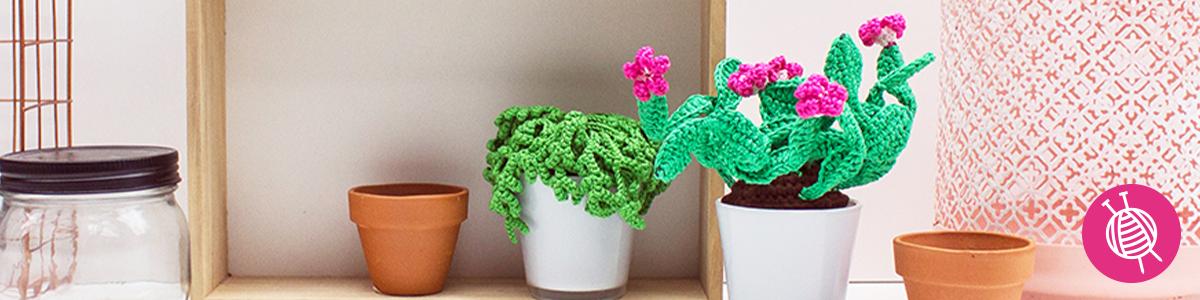 Vetplantjes haken - De trend van dit moment!