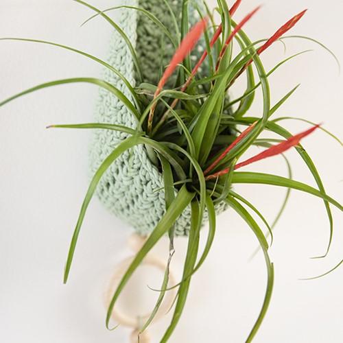 Homedeco Plantenhanger Haakpakket 1 Scandinavisch